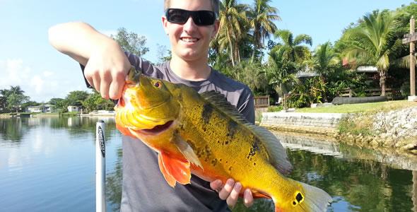 Miami peacock5 peacock bass fishing in the usa for for Peacock bass fishing miami