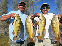 Peacock Bass Fishing trips - Florida Fishing