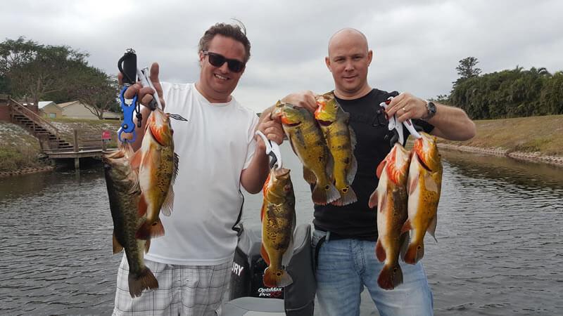 Palm Beach County Peacock Bass