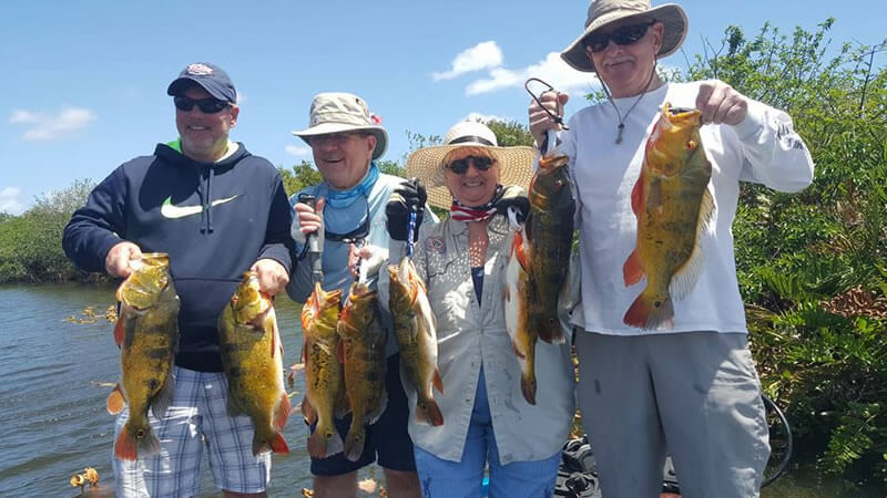 Group Peacock Bass Fishing Trip